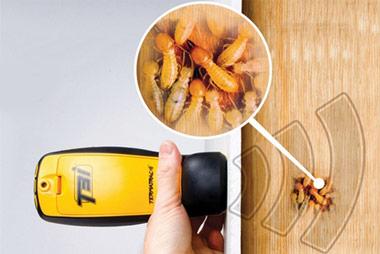 deteccion plaga madera