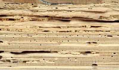 tratamientos de la madera