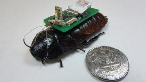 cucaracha chip