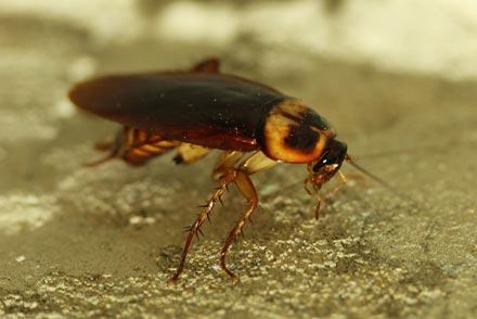eliminar cucarachas seguridad