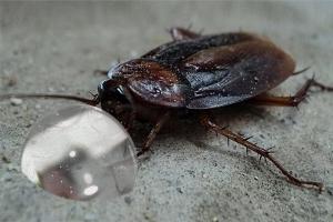 fumigacion cucarachas cebos