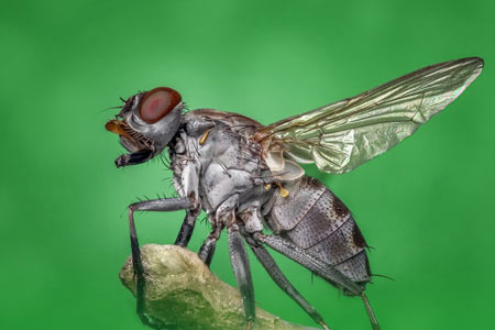 insecto-plaga