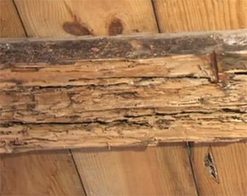 madera termita